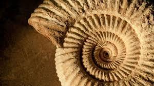Alla ricerca e studio delle ammoniti con aigae
