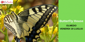 Casa delle farfalle: olmedo ven 19 lug