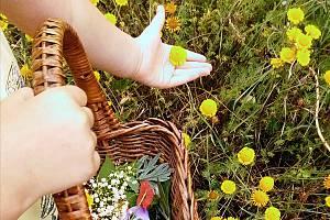 Erbe spontanee tra leggende, usi e tradizioni a sassoferrato