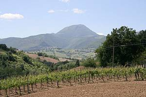 Terre del verdicchio - itinerario ciclistico self-guided
