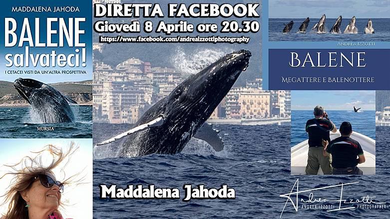 Balene salvateci! andrea izzotti incontra maddalena jahoda